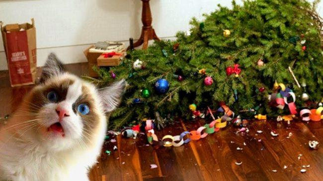 кот уронил елку