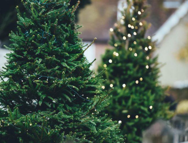 Как выбрать елку к Новому году 2022