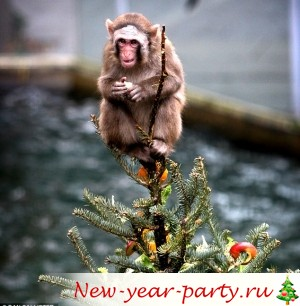 http://new-year-party.ru/wp-content/uploads/2016-god-kakogo-zhivotnogo-simvol-goda-obezyany1.jpg