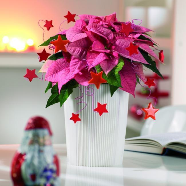 Цветы для женщины-начальника