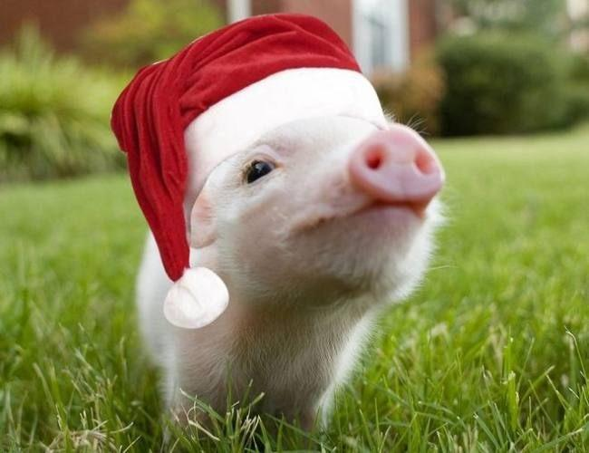 Поздравления с Новым годом Свиньи 2019