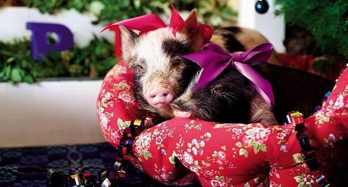 Милые Свинки под новогодней елкой