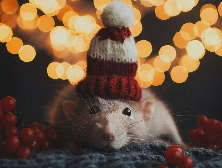 Меню новогоднего стола 2020 в год Крысы