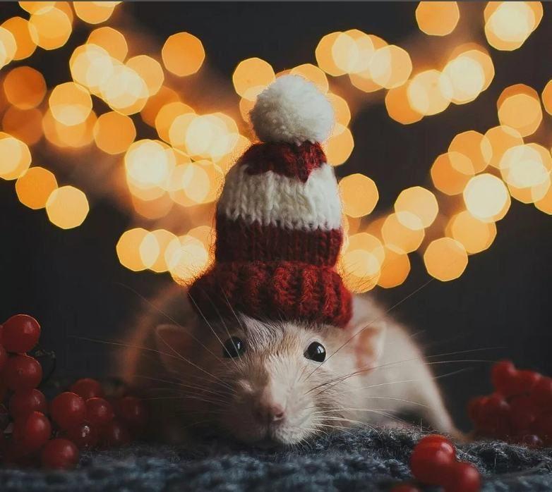 Крыса картинка на новый год
