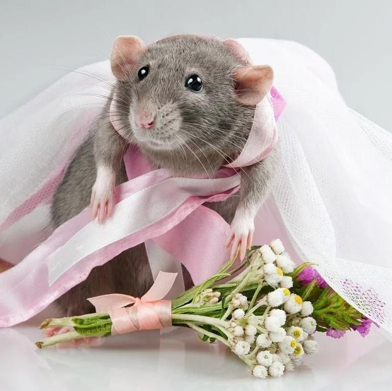 Праздничная мышка