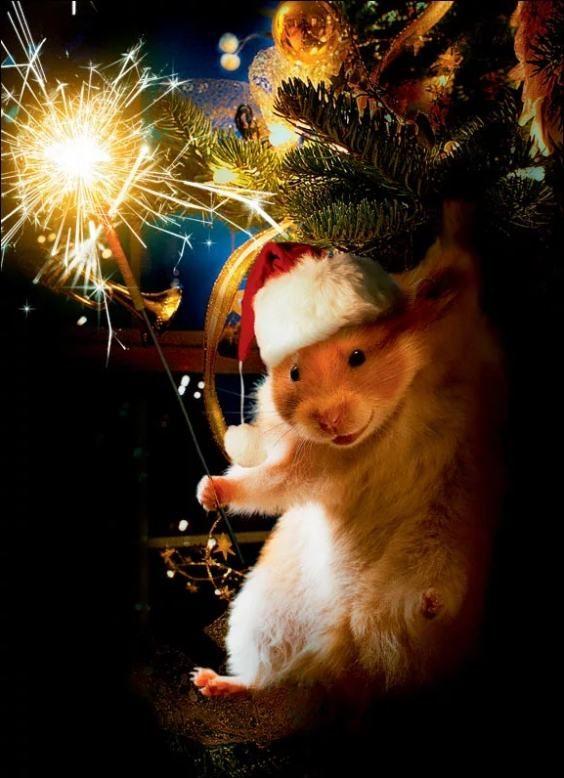 Новогодняя картинка мыши на елке