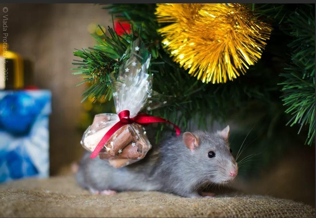 Картинки скачать с мышками