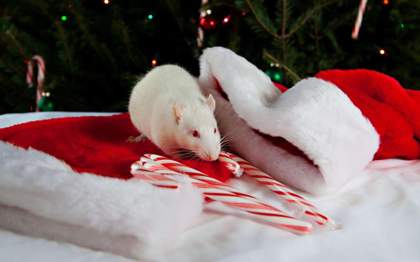 Новогодняя крыса 2020