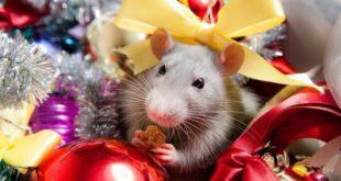 Раскраски с крысами