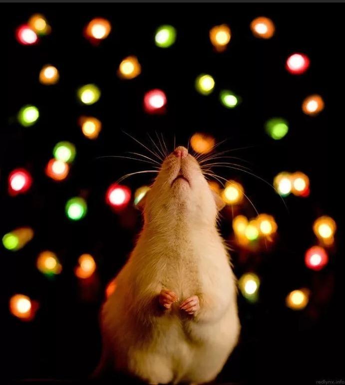 Скачать картинки мыши