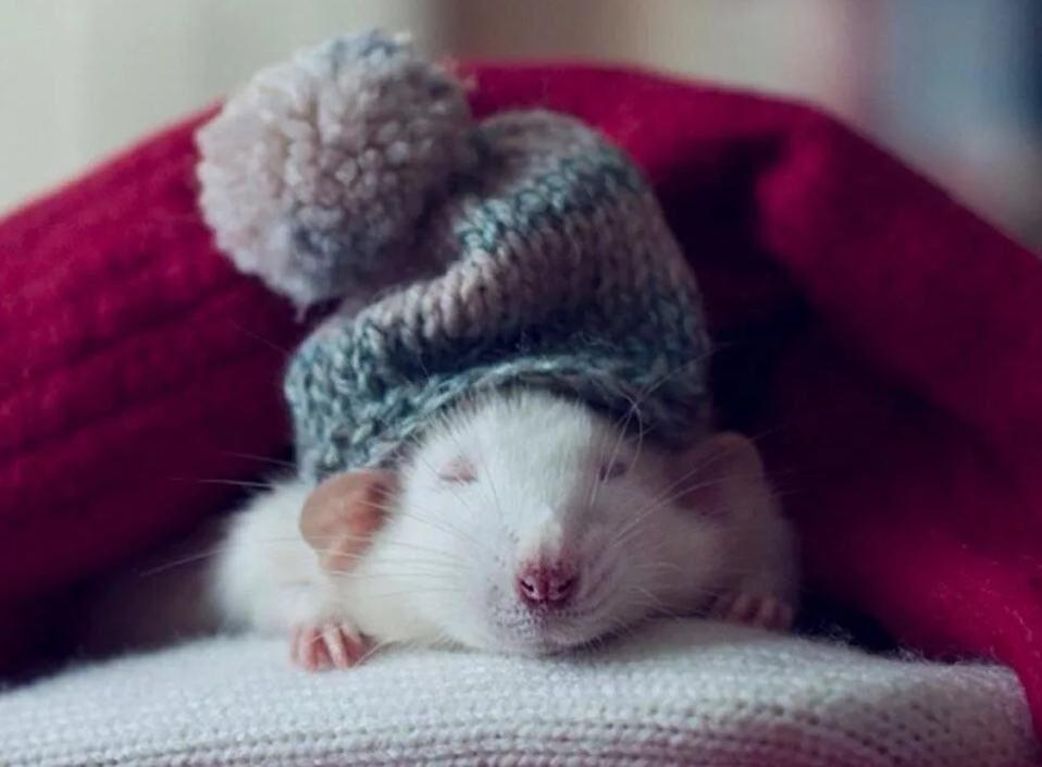 Картинки новогодние крысы 2020