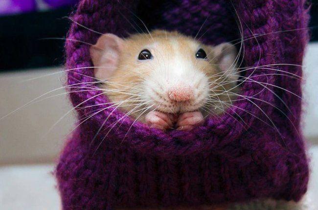 Вытынанки на год Крысы