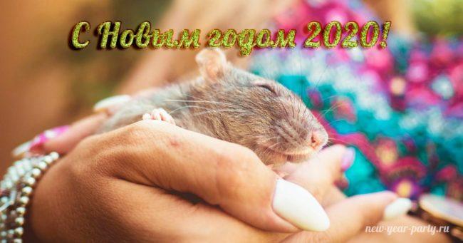 С Новым годом Крысы!