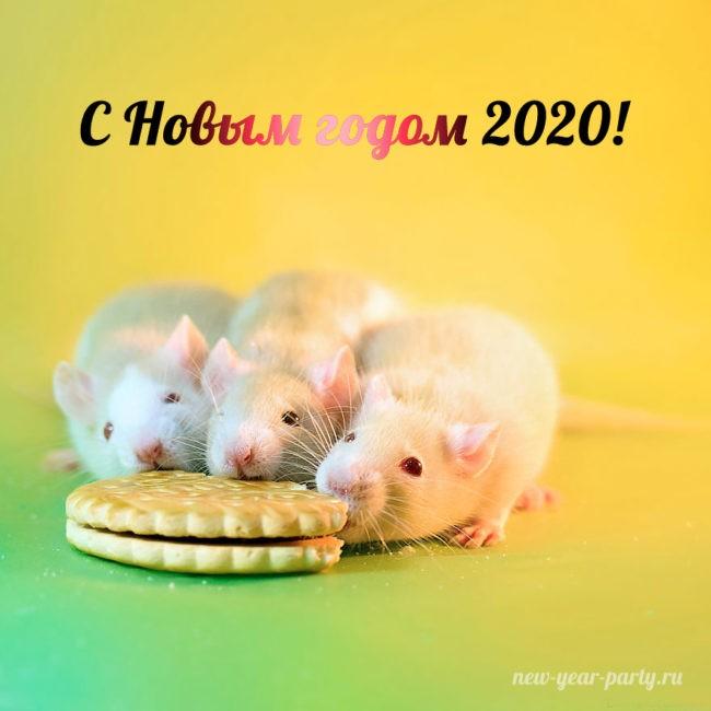 С наступающим Новым годом Крысы