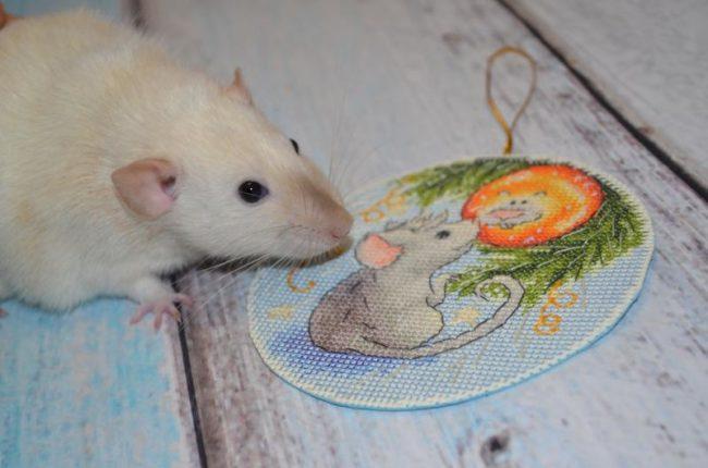 Схемы вышивки крестом Крысы