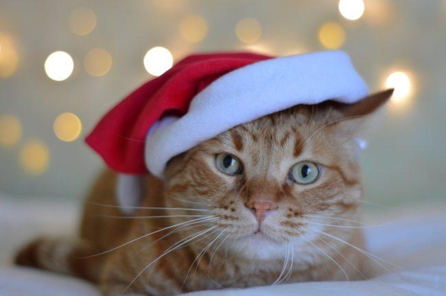 Котик в новогодней шапке