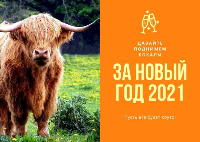 новогодний бык, картинка