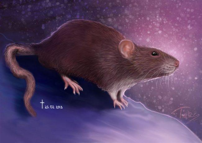 Гороскоп Крысы на 2022 год Тигра