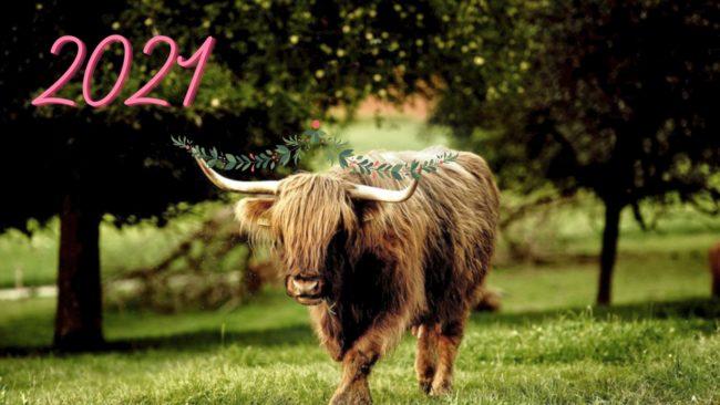 обои с быками