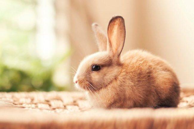 Гороскоп Кролика на год Тигра 2022