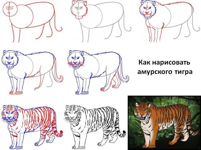 рисуем амурского тигра