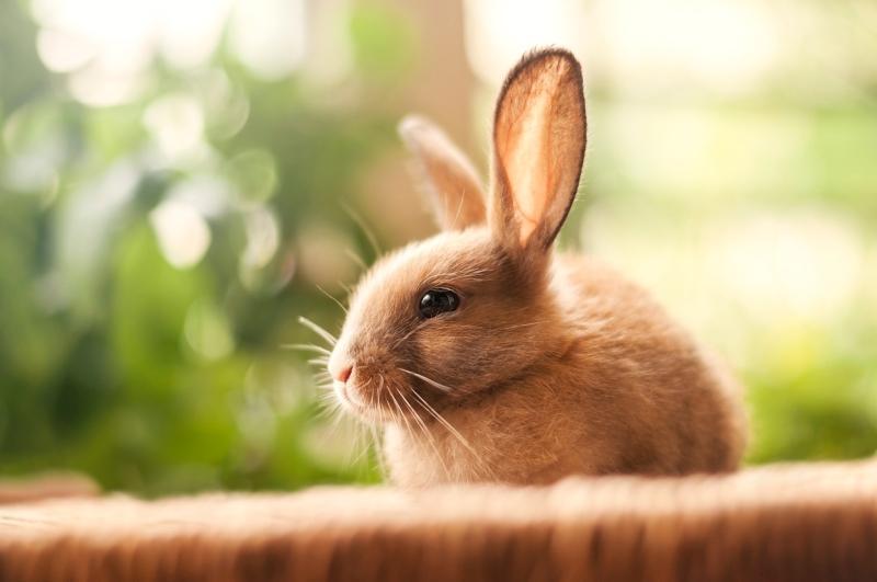 Что подарить на год Кролика