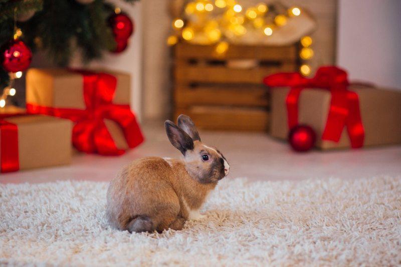 год Черного Водяного Кролика