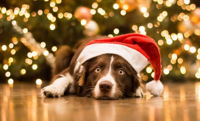 Новогодние открытки на год Собаки