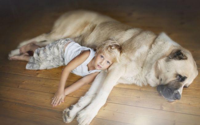 Дети рожденные в год Собаки, особенности