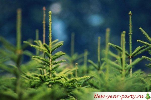 к чему снится зеленая живая елочка