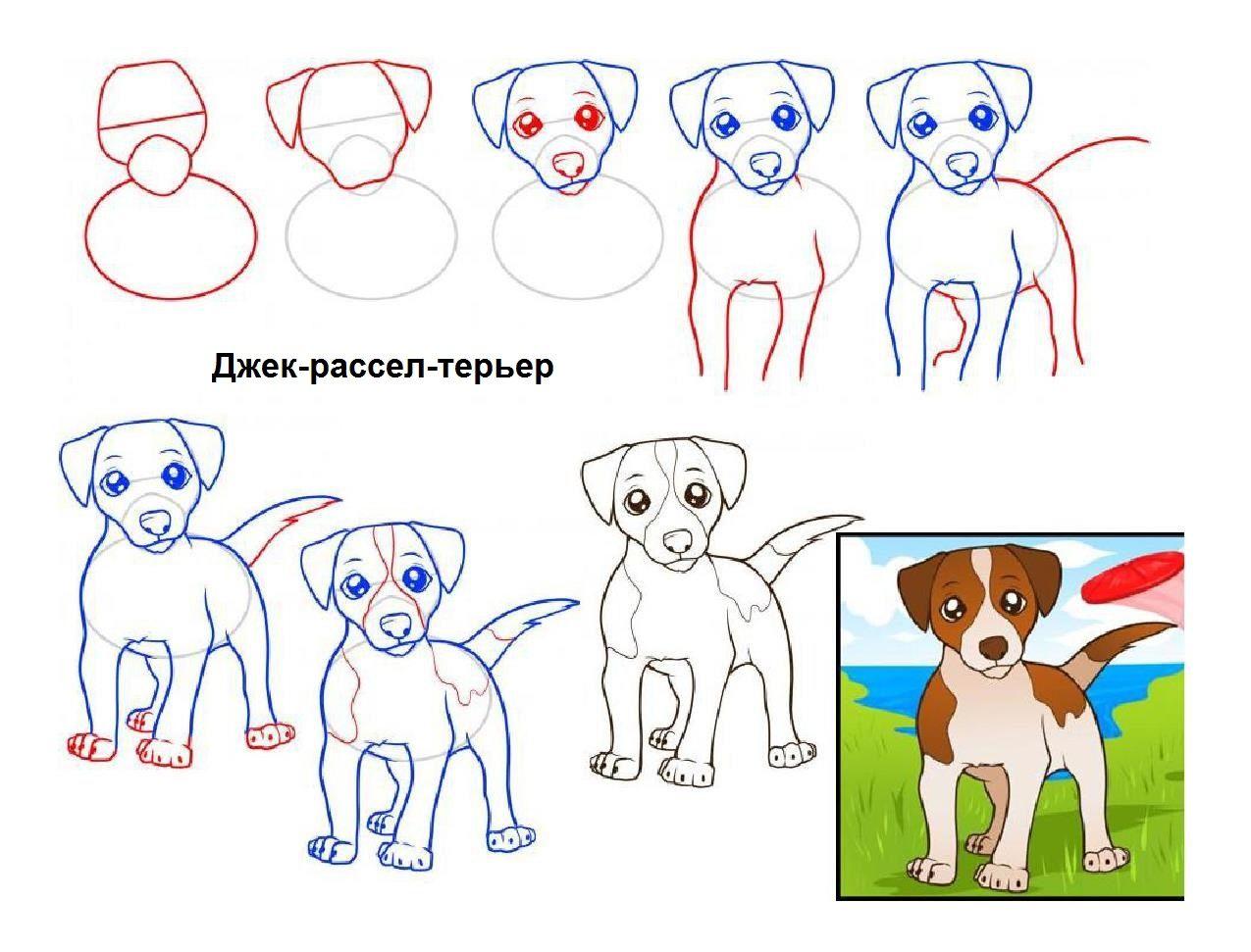 Как нарисовать собаку поэтапно простым карандашом простые
