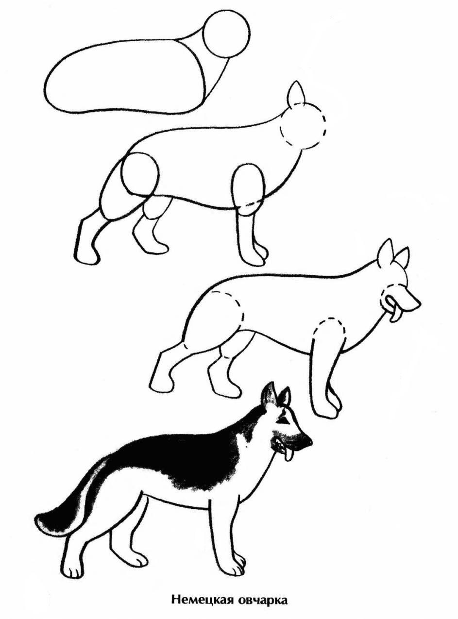 Щенка немецкая овчарка нарисовать поэтапно