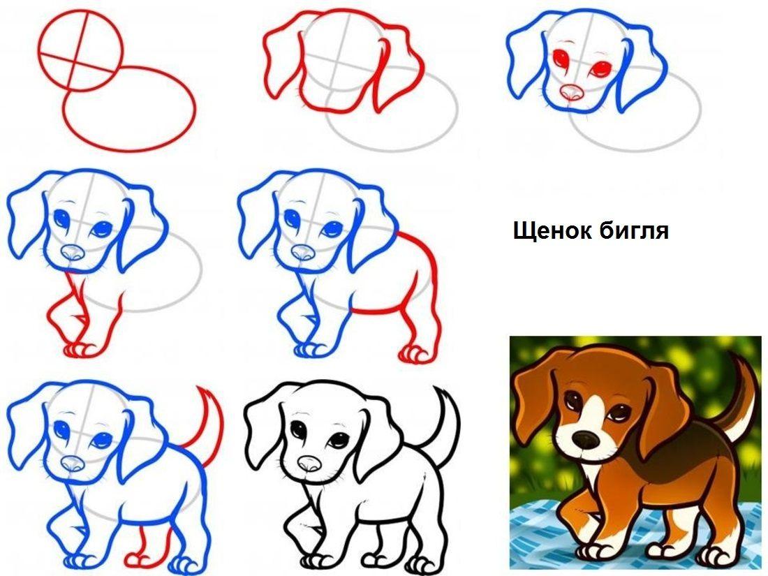 Как нарисовать маленького собачку поэтапно