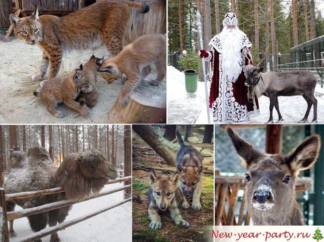 Зоопарк деда Мороза