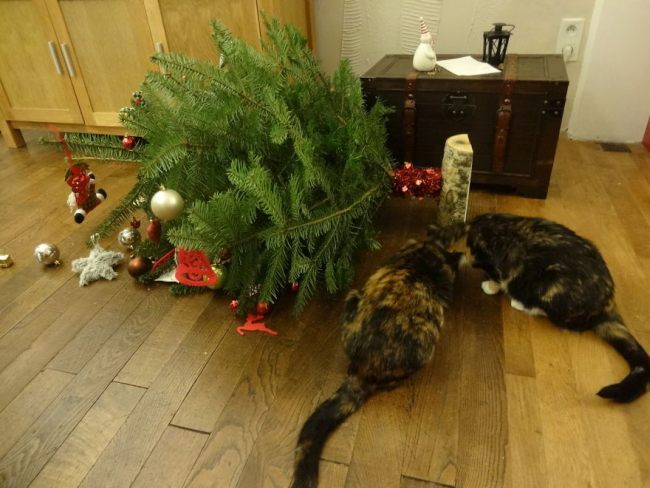 Коты на елке