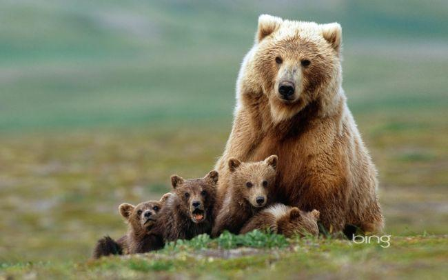 Маска медведя для ребенка