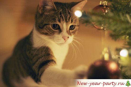 фото Новогодних котов
