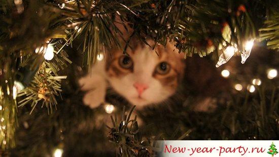 Новогодние кошки, картинки