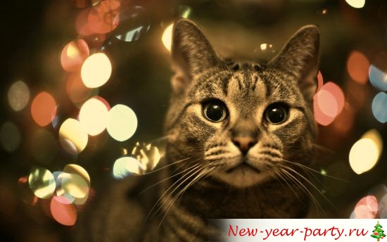 novogodnie-koty-kartinki-foto007