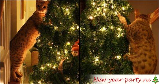 novogodnie-koty-kartinki-foto01