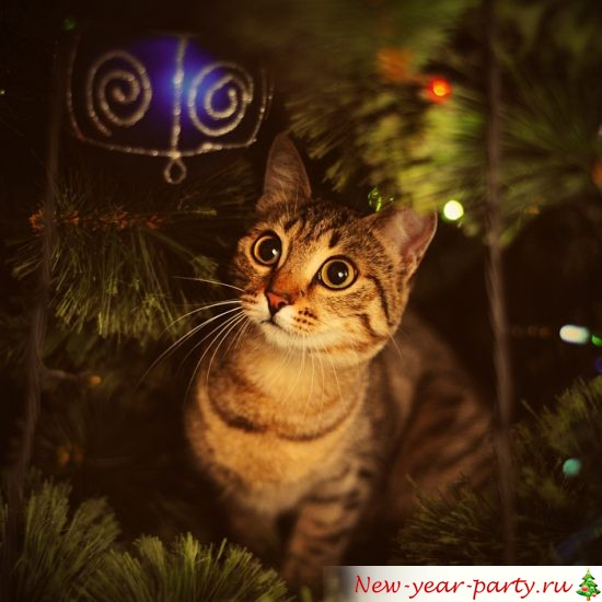 novogodnie-koty-kartinki-foto02