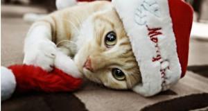 novogodnie-koty-kartinki-foto020