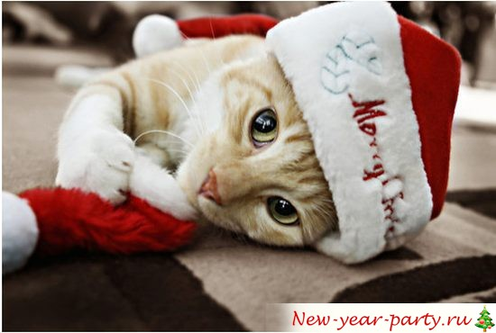 Новогодние коты 2018