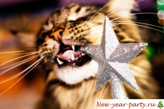 novogodnie-koty-kartinki-foto03