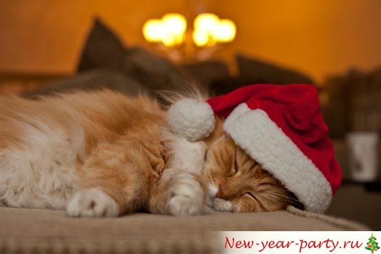 novogodnie-koty-kartinki-foto04