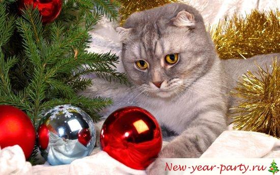 novogodnie-koty-kartinki-foto06
