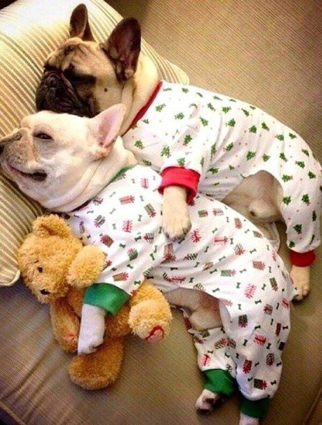 Собаки в пижамах