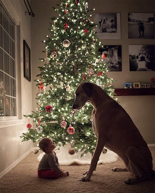 Замечательное новогоднее фото с ребенком и собакой