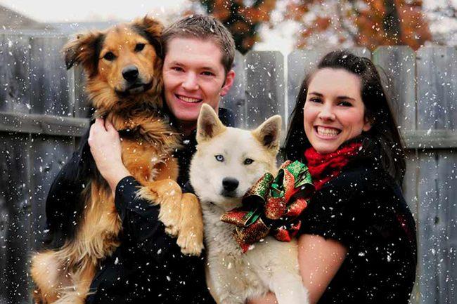 Зимнее фото с собаками