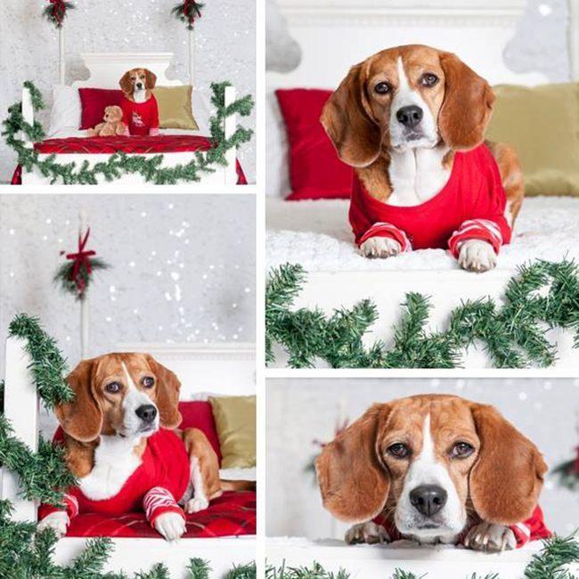Милый пес под новогодней елкой